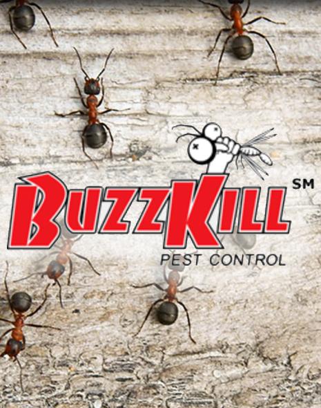 portfolio_buzzkill-featured